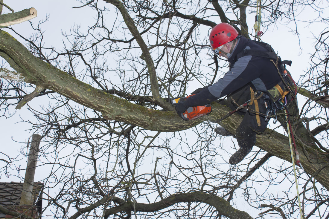 man trimming the tree